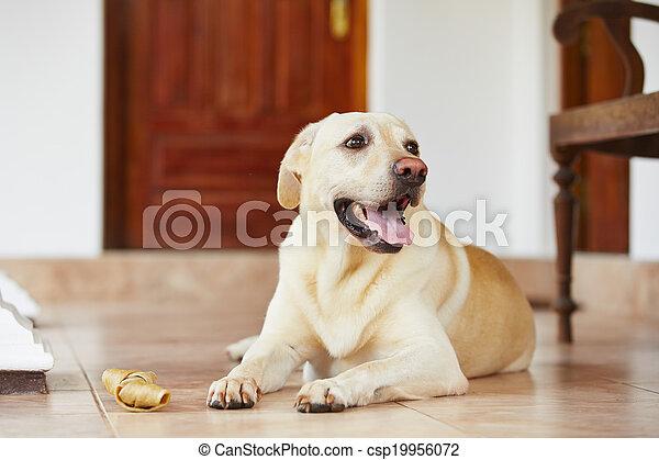 Immagini di cane osso labrador cane da riporto con for Piani casa cane trotto