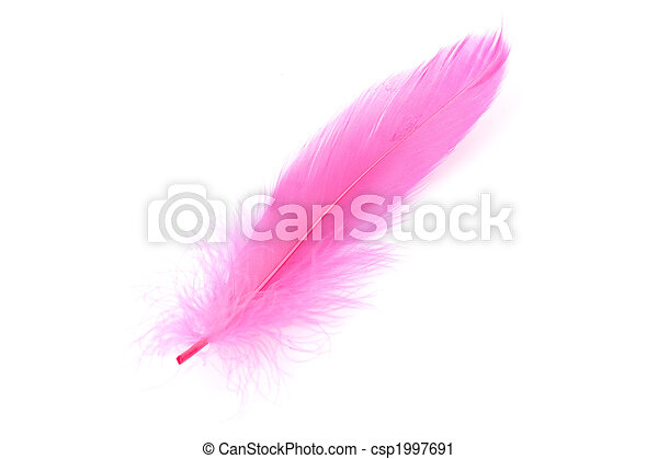 Pink Feather - csp1997691