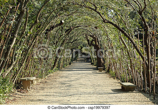 alley with bay laurel, evergreen tree, in historic Boboli Gardens in Florence, Tuscany, Italy, Europe