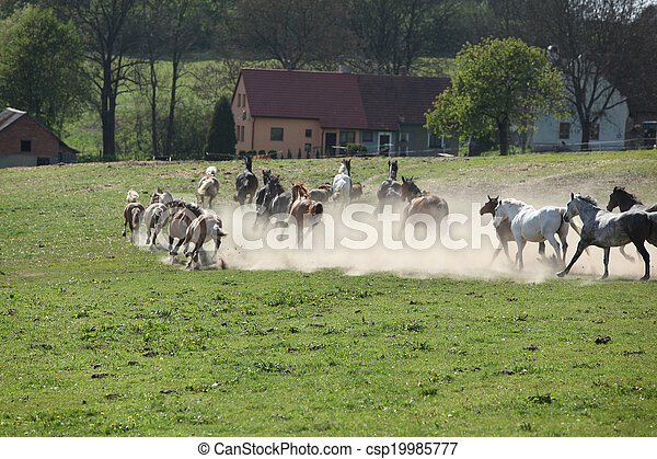 Immagini di cavalli polvere lontano correndo lotto for Piani di ranch tentacolare