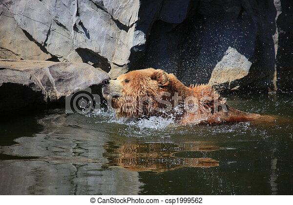 kodiak brown bear - csp1999562