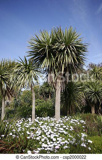 photo de palmier bretagne il est a partie une exotique csp2000022 recherchez des. Black Bedroom Furniture Sets. Home Design Ideas