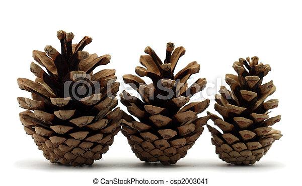 Pine cones - csp2003041