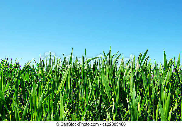 green lawn - csp2003466