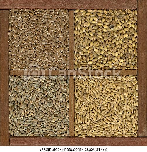 wheat, barley, oat and rye grain - csp2004772