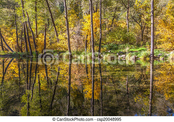 Fall Reflection in Stream - csp20048995