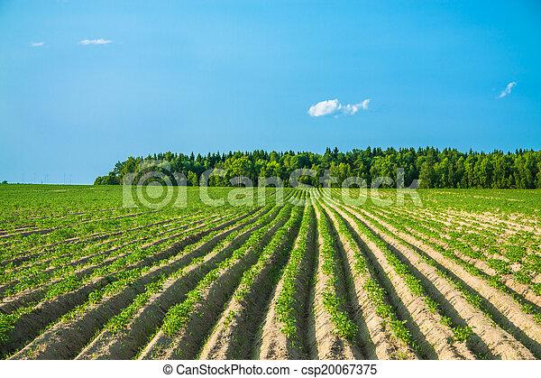 rural landscape with a potato field - csp20067375