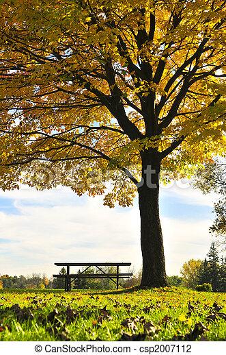 Autumn trees - csp2007112