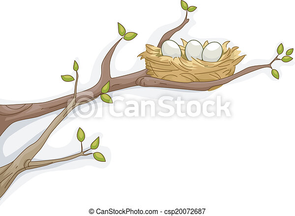 Bird's Nest - csp20072687