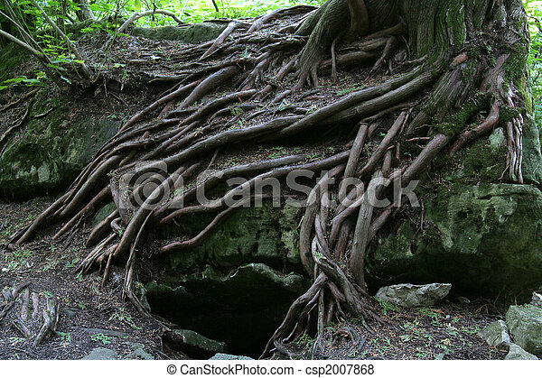 Magical Tree Roots - csp2007868