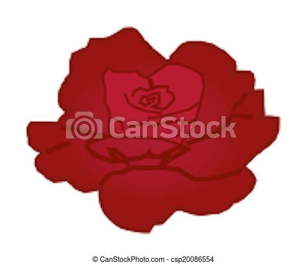 Red Rose - csp20086554