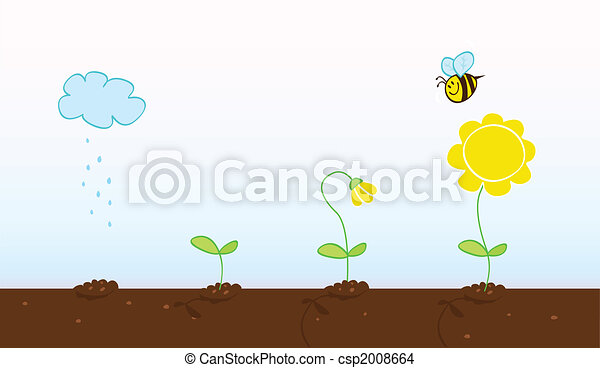 Flower growing stages - csp2008664