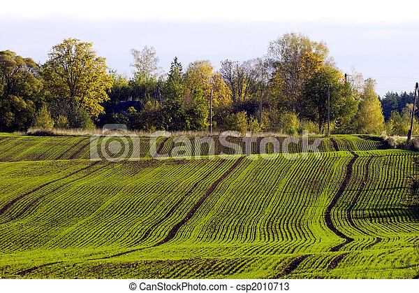 Winter crop field - csp2010713