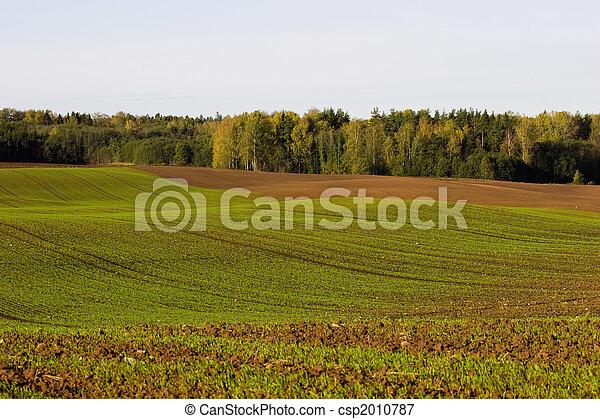 Winter crop field - csp2010787