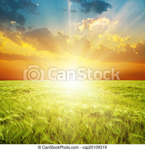 guten, aus, Feld, grün,  orange, Sonnenuntergang, landwirtschaft - csp20109319