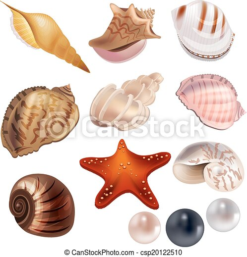 Set with realistic shells and pearls - csp20122510