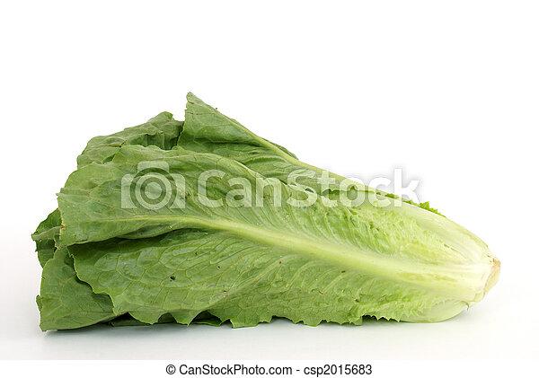Romaine Lettuce - csp2015683