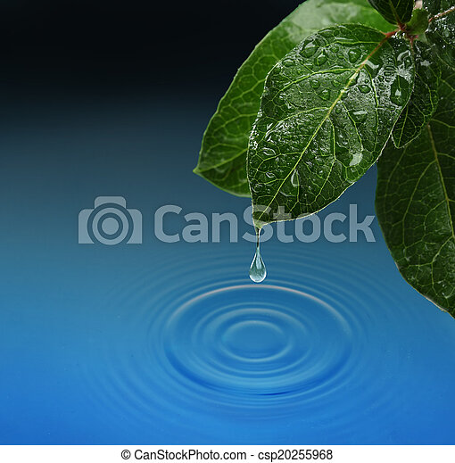 Green leaf with water drop falling.  - csp20255968