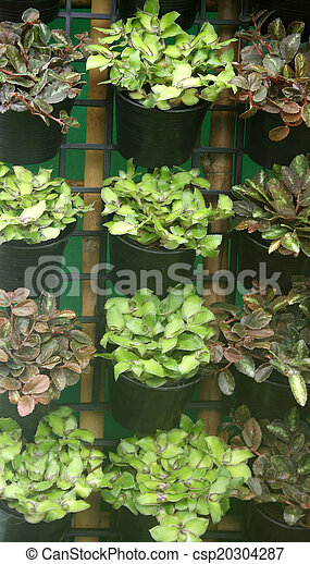 Organic hydroponic vegetables Vertical garden - csp20304287
