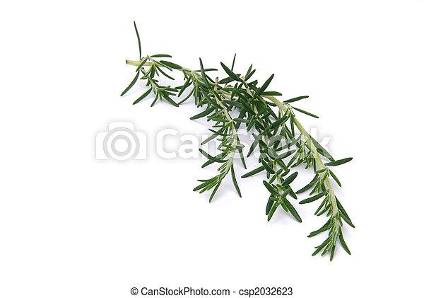 Rosemary 04 - csp2032623