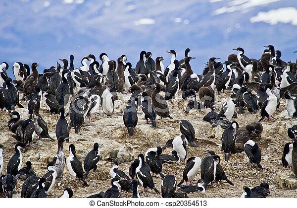 Birds - Cormorant Colony - csp20354513