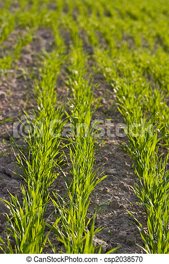 agriculture field - csp2038570
