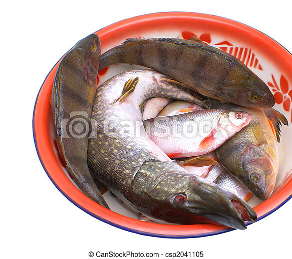 Stock images of freshwater fish fresh edible fish in for Edible freshwater fish