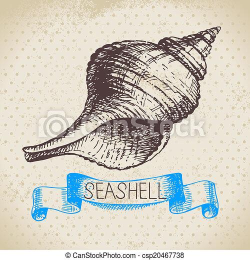 Seashells hand drawn sketch. Vintage illustration - csp20467738