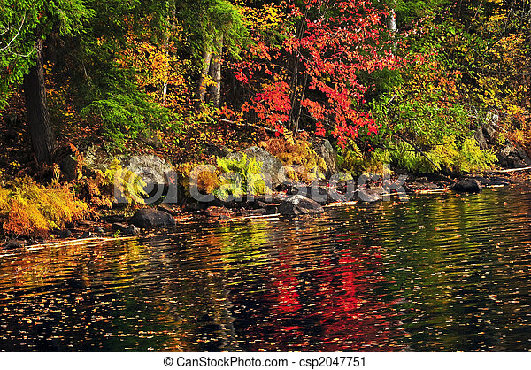 Fall forest and lake shore - csp2047751