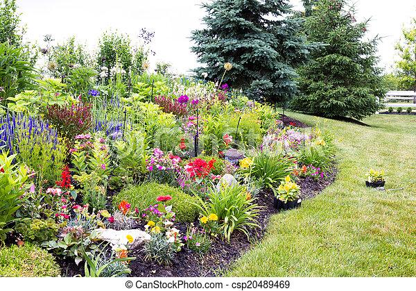 Image de am nag color jardin fleur celosia color for Photos fleurs de jardin