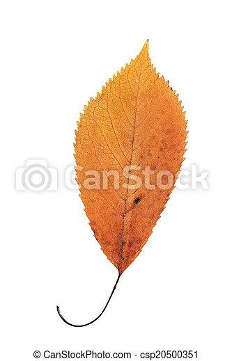 美しい, オレンジ, 秋リーフ, さくらんぼ - csp20500351