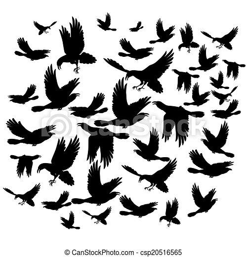 Black ravens - csp20516565