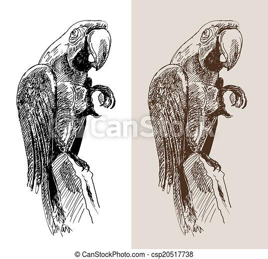 Vecteurs de croquis perroquet oiseau noir typon for Dessin graphique noir et blanc
