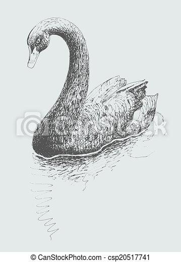 天鹅复杂手绘素描
