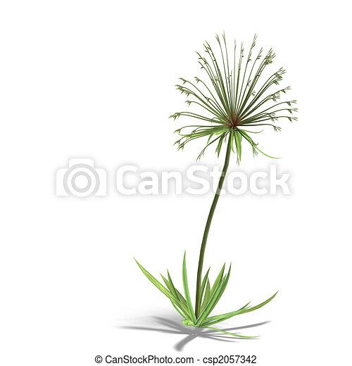 Papyrus - csp2057342
