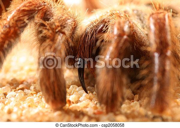 Big bird spider Big bird spider  - csp2058058