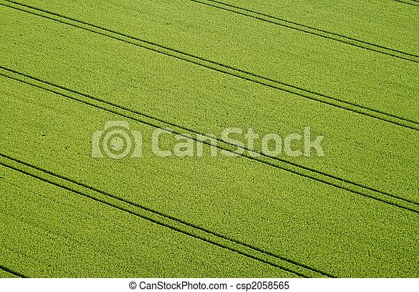 Cornfield, Aerial Photo - csp2058565