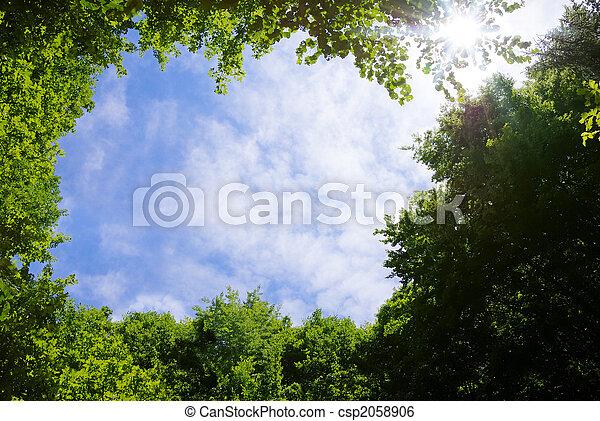 Forest frame - csp2058906