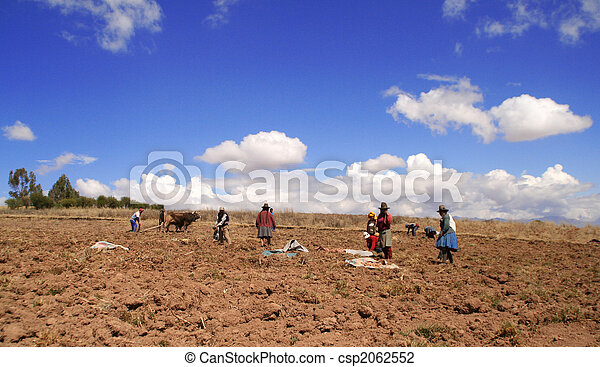 Potato Harvest in Peru - csp2062552
