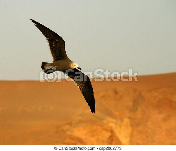 Bird - csp2062773