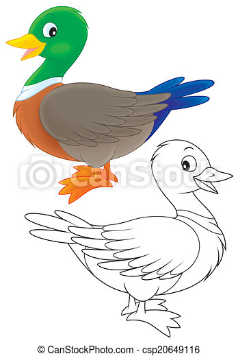 Clipart de canard sauvage canard couleur et noir - Illustration canard ...