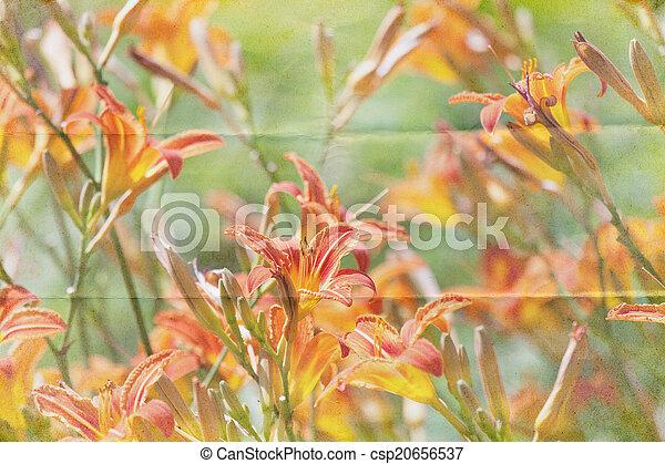 Photos de jardin plantes vivaces fond csp20656537 for Jardin plantes vivaces