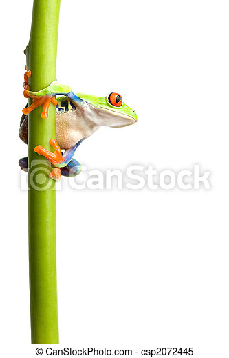 frog on plant stem isolated - csp2072445