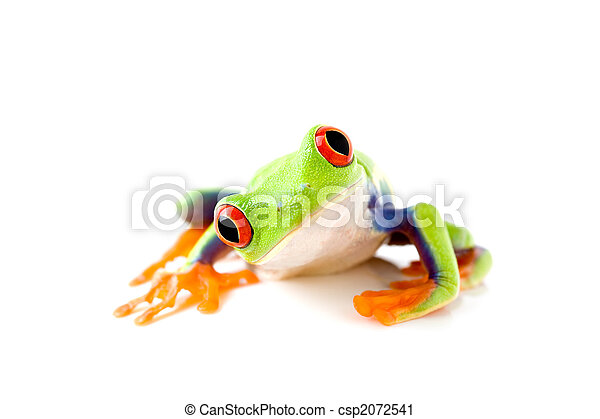 frog is curious - csp2072541