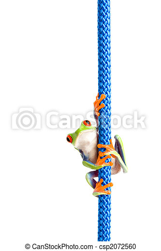 frog on a rope isolated white - csp2072560