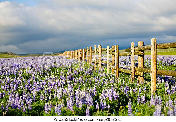 wildflowers in wyoming - csp2072575