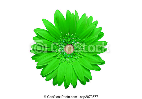 geen daisy isolated on white - csp2073677