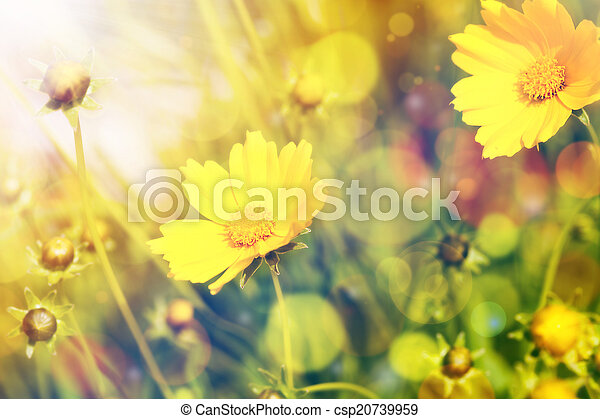 Yellow flowers with sunshine over natural background - csp20739959