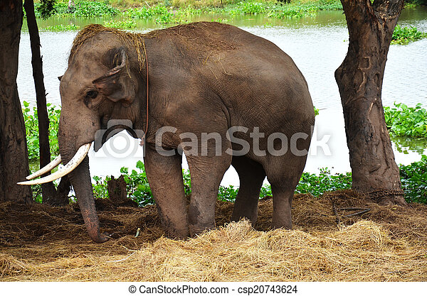 Thai Elephant Symbol The Thai Elephant Symbol of