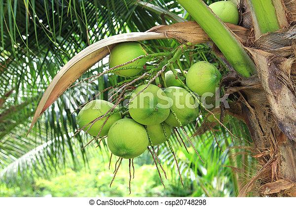 Coconut tree - csp20748298
